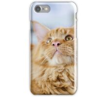 Red-white tabby Maine Coon cat iPhone Case/Skin
