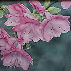Azaleas by Huckleberry20