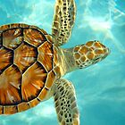 Baby Sea Turtle by Shaynelee