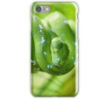 Green tree python, Morelia viridis iPhone Case/Skin