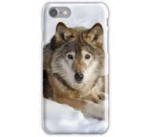 Wolf (canis lupus) portrait iPhone Case/Skin