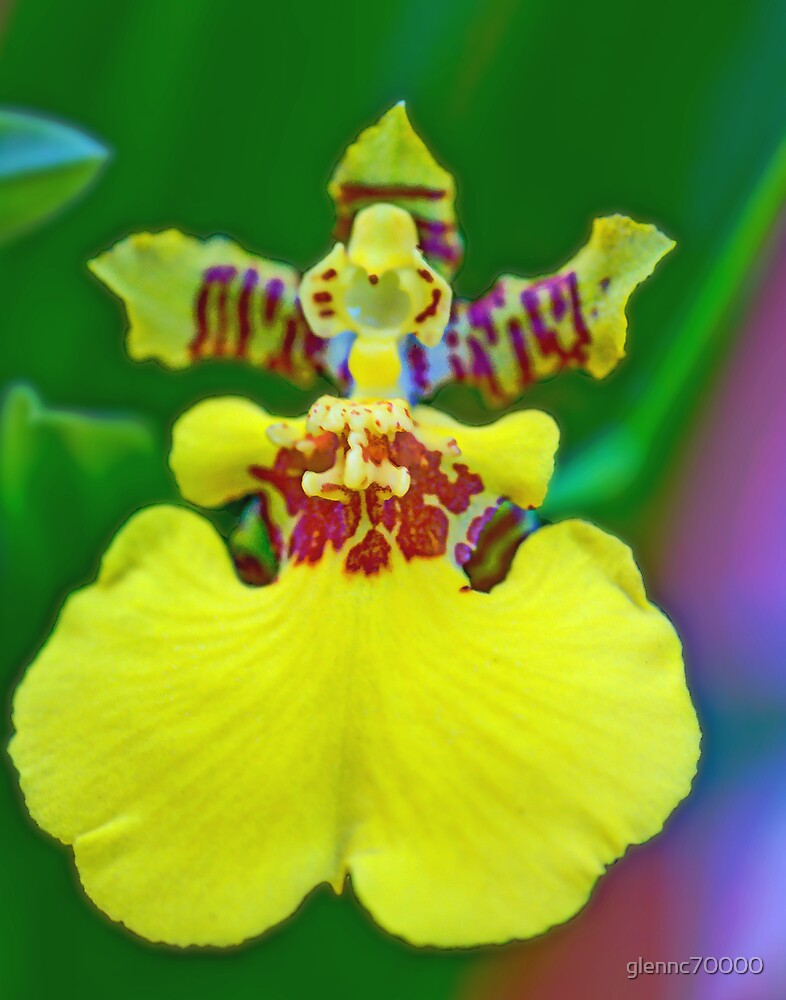 Whatkinda Orchid (Dancing Lady) by glennc70000