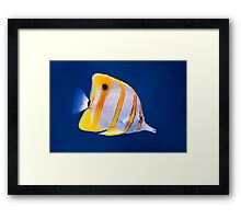Exotic tropical coral reef copperband butterfly fish Framed Print