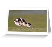 Egyptian Goose (gosling) Greeting Card