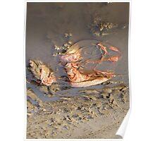 Lobster Bag Poster