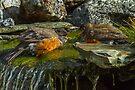 WATER FIGHT by Sandy Stewart
