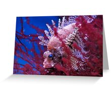 Lionfish in a red seaweed Greeting Card