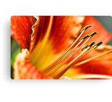 Beautiful Orange Daylily Canvas Print