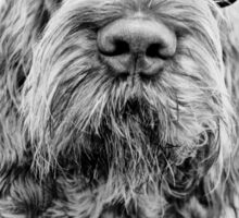 Brown Roan Italian Spinone Dog Head Shot with Glasses Sticker