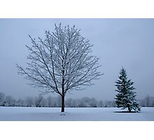 Snow Trees Photographic Print
