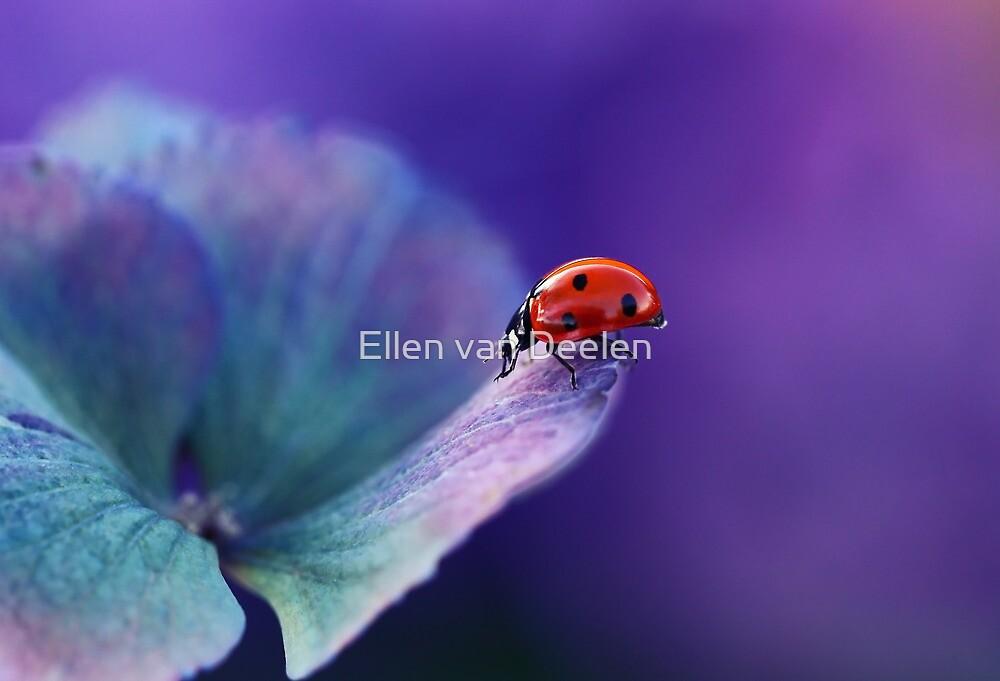 Ladybird....... by Ellen van Deelen