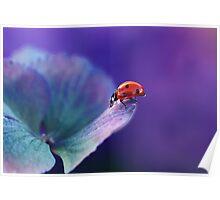 Ladybird....... Poster