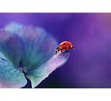 Ladybird....... Photographic Print