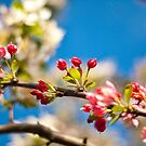 Coming Out To Bloom by ea-photos