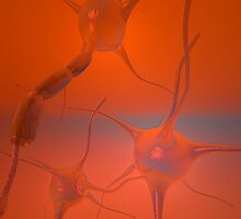 Neurons by Carol and Mike Werner