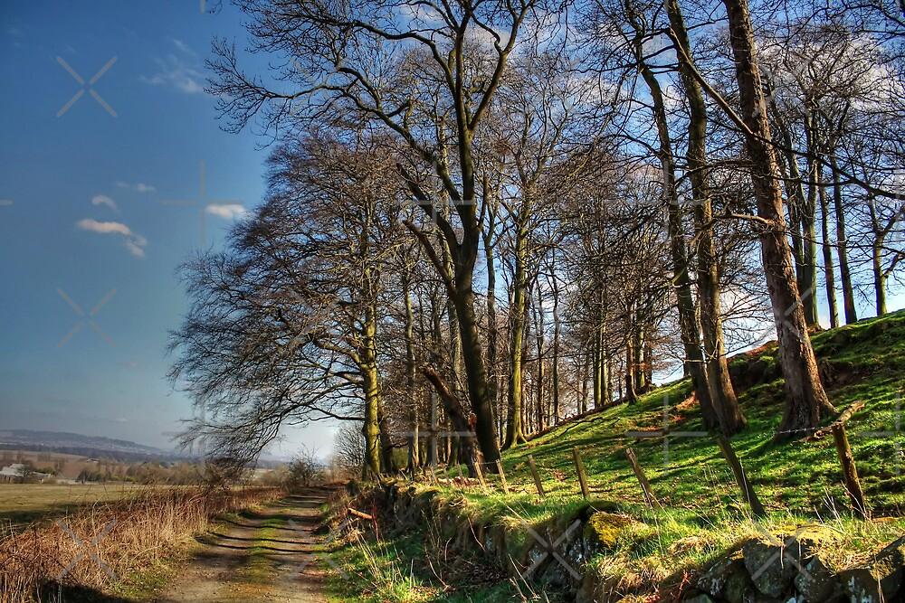 Along Platt Hill Lane by Tom Gomez