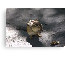 This chipmunk knew how to pull at my heart strings..LOL Canvas Print
