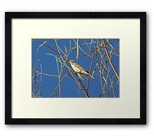 Lark Sparrow ~ Adult Framed Print