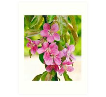 Apple Tree Flowers 'Maypole' Art Print