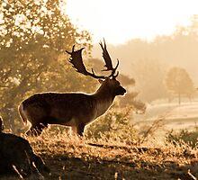 Deer in Knole Park by samcmoore
