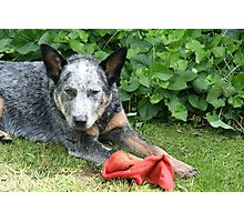 Tom and sock Photographic Print