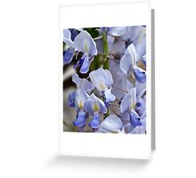 Japanese Wisteria 'Lawrence' Greeting Card