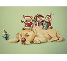 Beary Christmas Photographic Print