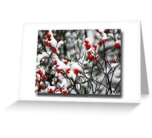 Red berries for Christmas Greeting Card