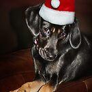 Santa's Helper by Ticker