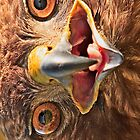 Smile - Red Tail Hawk - iPhone Case by Buckwhite