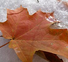 A Fall With Snow  by Matt Corso
