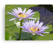 Water lilies & the bees, Gold Coast, Queensland Canvas Print