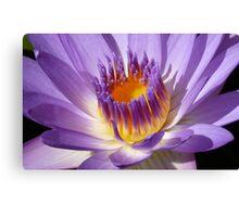 Water lily (macro), Gold Coast, Queensland Canvas Print