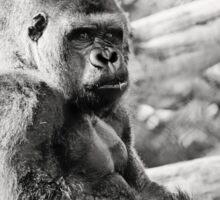 Female Silverback Gorilla Black and White Sticker