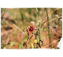 Oklahoman Wildflower Poster