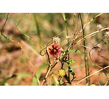 Oklahoman Wildflower Photographic Print