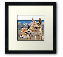Lama in Andes Framed Print