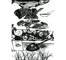 Fish Compost: From start to finish  Photographic Print