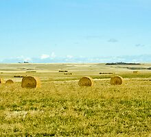 harvest on the prairies by axieflics