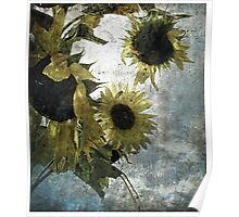 autumnal sunflowers Poster