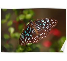 Beautiful Blue Butterfly Poster