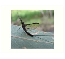 Mayfly over the Leigh River Art Print