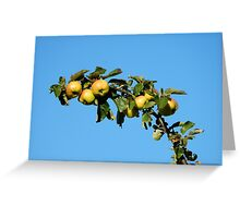Apples - autumnal yellow Greeting Card