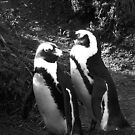 A nesting pair of African penguins bask in the early morning sun by kimmylowe1986
