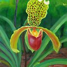 SLIPPER ORCHID by HAMISH CUMING