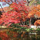 Autumn Reflections by Vivian Sturdivant