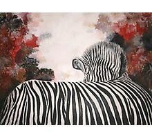 Polly's Zebra  Photographic Print