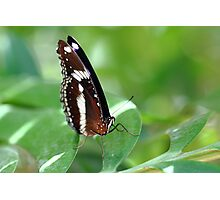 """""""Butterfly 3.0"""" Photographic Print"""