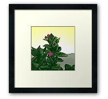 Evening under the southern skies  Framed Print