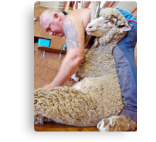 Shearer at Work #2 Canvas Print